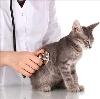Ветеринарные клиники в Верхошижемье